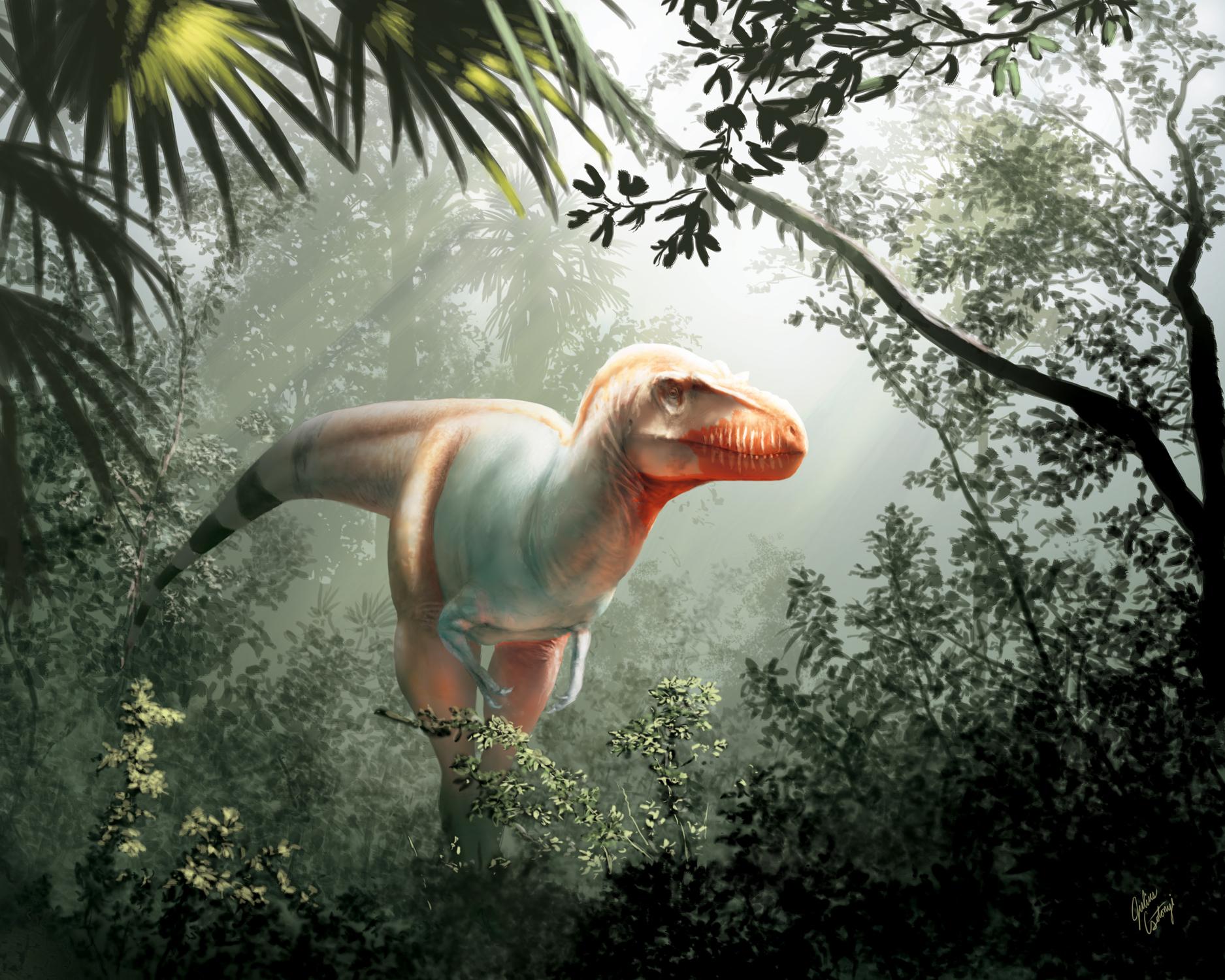 اكتشاف ابن عم للديناصورات تي ريكس - حيوانات تيرانوصور ريكس Tyrannosaurus rex التي اجتاحت سهل أمريكا الشمالية - الديناصورات