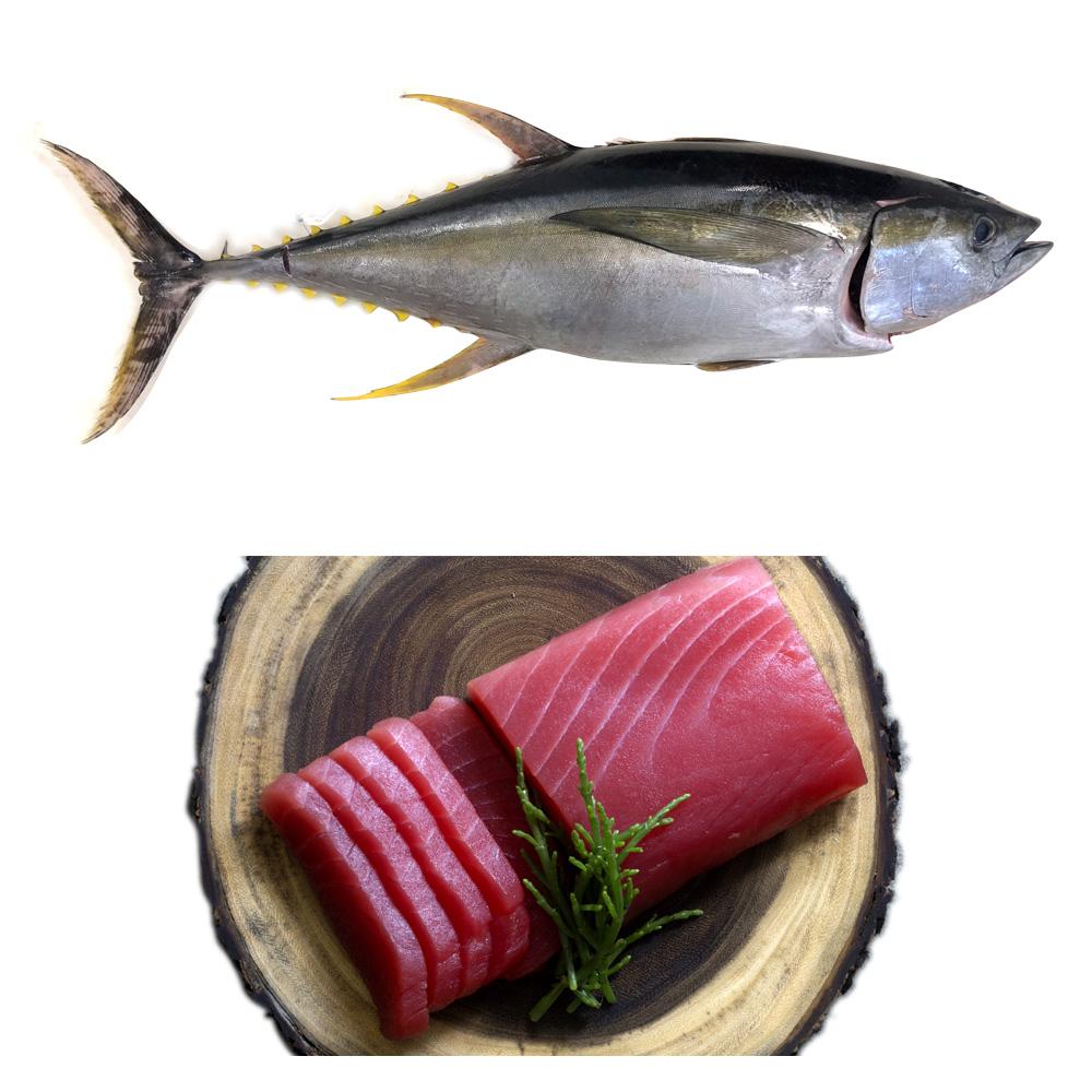وصف الصورة: سمك التونة، من الأسماك المحتوية على الزئبق