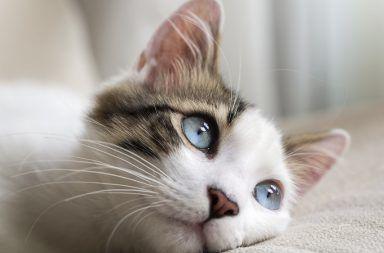 11 من الأمراض التي تنتقل من الحيوانات إلى الإنسان مجموعة من الأمراض التي يمكن للحيوانات أن تنقلها إلى البشر فضلات الحيوانات