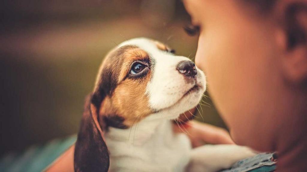 امتلاك كلب يرتبط بحياة أطول خاصةً للناجين من النوبات القلبية نوبات قلبية أو سكتات دماغية يخفض امتلاكك لكلب من خطر الإصابة بنوبة قلبية