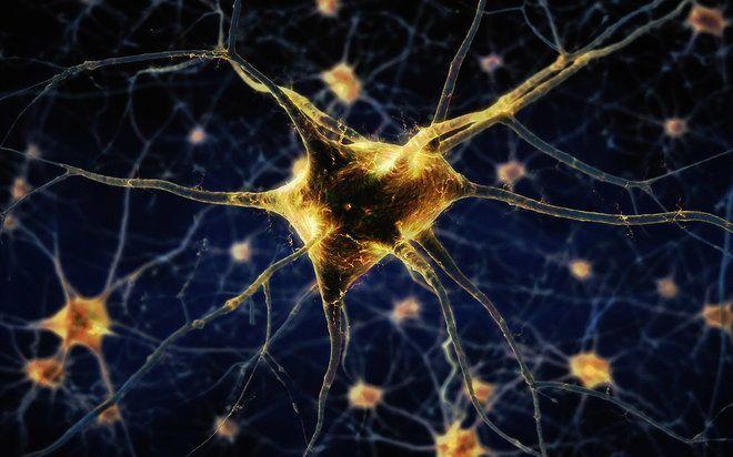 إنجاز عظيم: تحويل خلايا الدم إلى خلايا عصبية فعالة