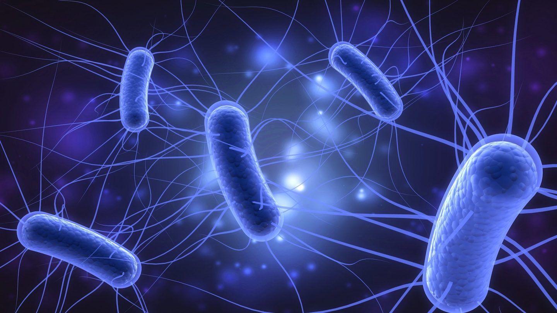 ما هي جرثومة الإشريكية القولونية E. coli؟