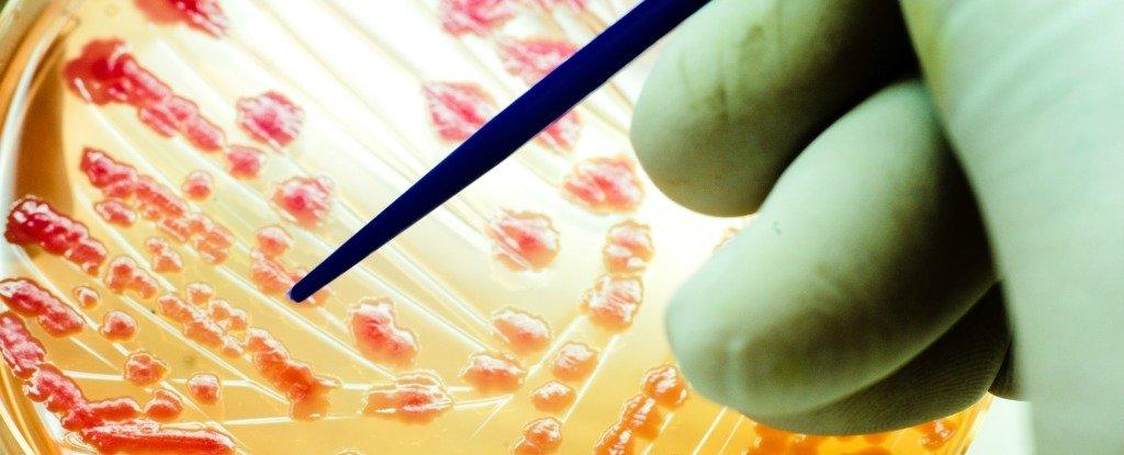 هل توصل العلماء الى حل للتغلب على مقاومة المضادات الحيوية ؟