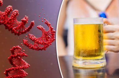 الكحول الشرب الجينات الإدمان