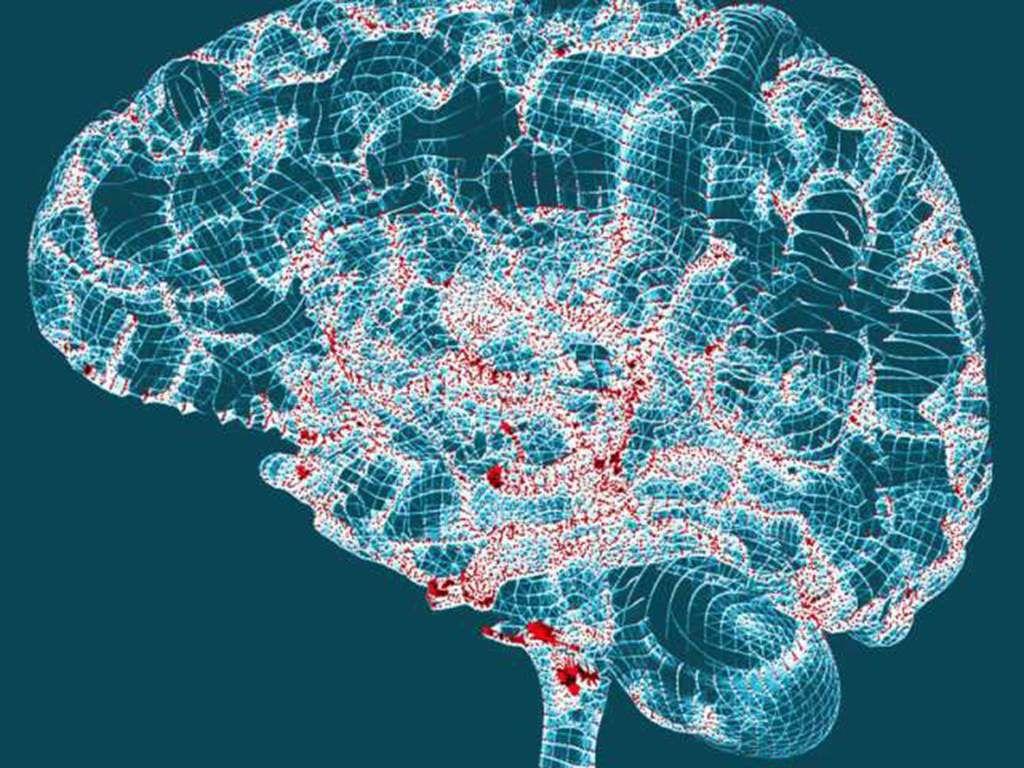 يبدو أن داء ألزهايمر يهاجم العصبونات التي تبقينا يقظين صفائح بروتينات بيتا أميلوئيد تشابكات بروتينات تاو القيلولات النهارية الزائدة والمفرطة