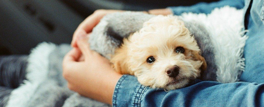 هل نحب الكلاب أكثر مما نحب البشر؟