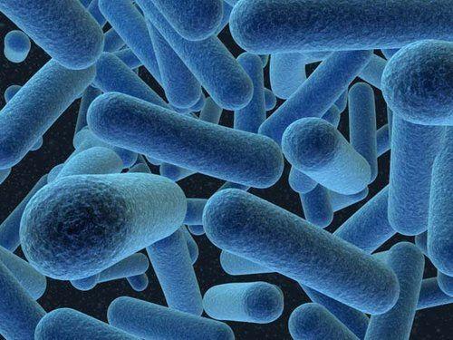كيف تؤثر الميكروبات في الأمعاء على داء الكريات المنجلية؟