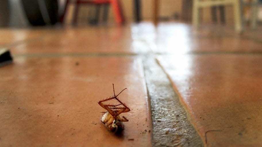 ماذا لو لم يكن هناك صراصير؟