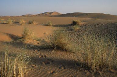 كيف تنشأ الصحاري؟ ولماذا هي حارة للغاية؟ - الحرارة النوعية المنخفضة للرمال والصخور - الضغط الجوي المرتفع والقاريّة والتبريد الساحلي