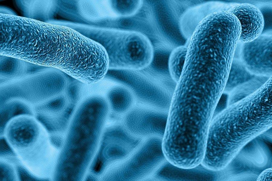 البكتيريا الجراثيم المكورات العقدية