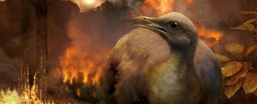 كان للطيور التي نجت من انقراض الديناصورات ميزة غير متوقعة