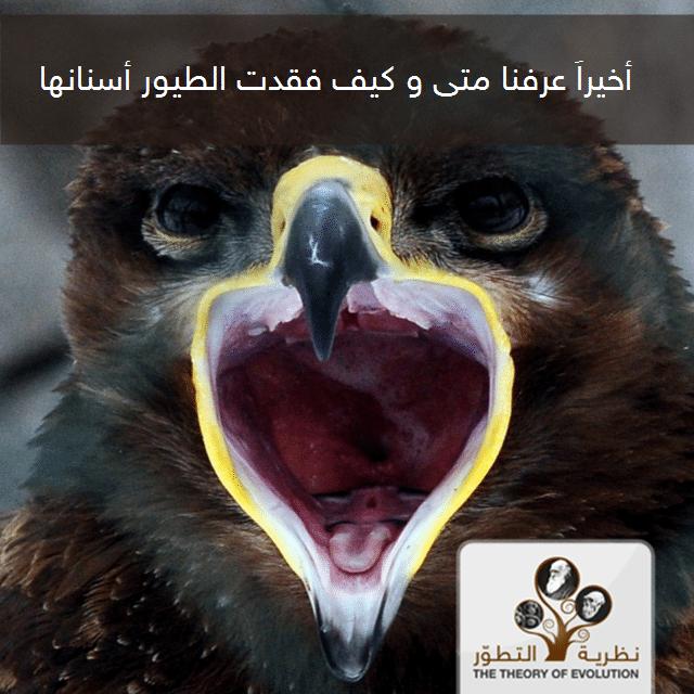أخيراً ، عرفنا متى و كيف فقدت الطيور أسنانها.