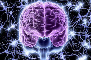 دماغنا يكون تراكيبًا في 11 بعدًا الأبعاد التي يتخيلها الدماغ فضاء من أحد عشر بعدًا شكل ثلاثي الأبعاد شكل رباعي الأبعاد القشرة المخية