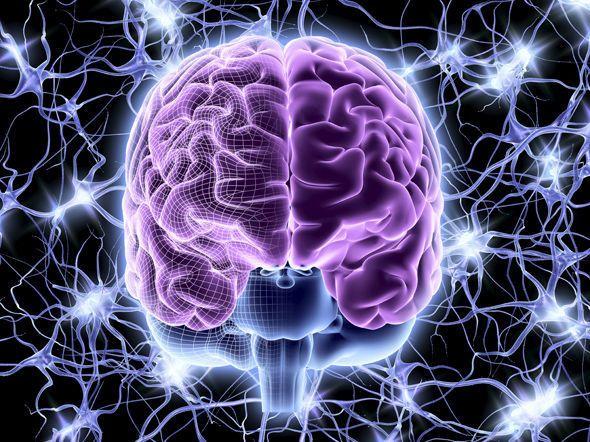 يستطيع الدماغ تكوين تراكيب في 11 بعد