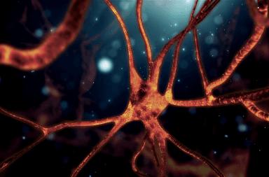 فيزيائيون يبطلون تفسيرًا لكيفية عمل الخلايا العصبية دام لما يزيد عن مئة عام كيف تعمل الخلايا العصبية كيف تعمل خلايا الدماغ وظيفة العصبونات