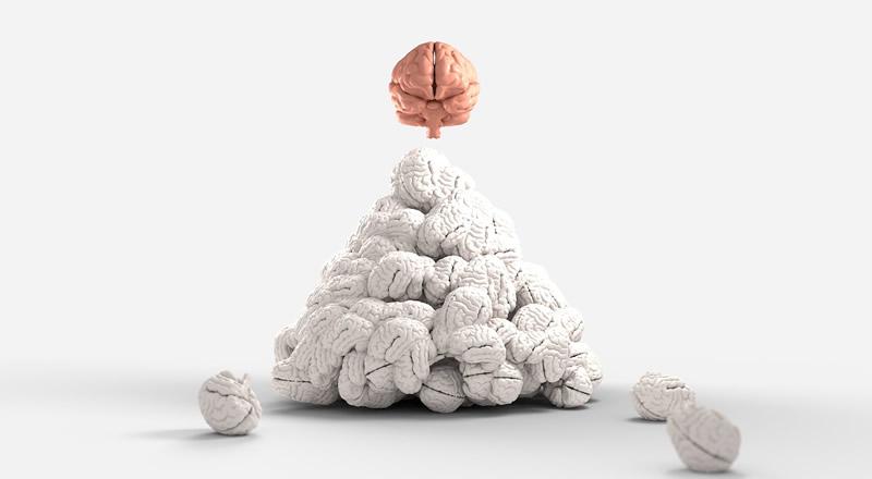 هل الأدمغة الأكبر بالفعل أفضل؟ - الحجم الأكبر لا يعني بالضرورة ذاكرةً أفضل - قدرات التعلم والذاكرة لدى البالغين الأكبر سنًا