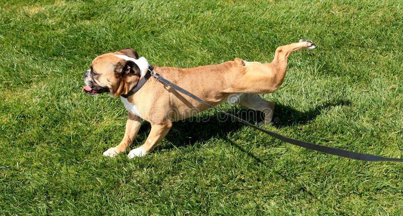 لماذا تحفر الكلاب الأرض بعد أن تتبول؟