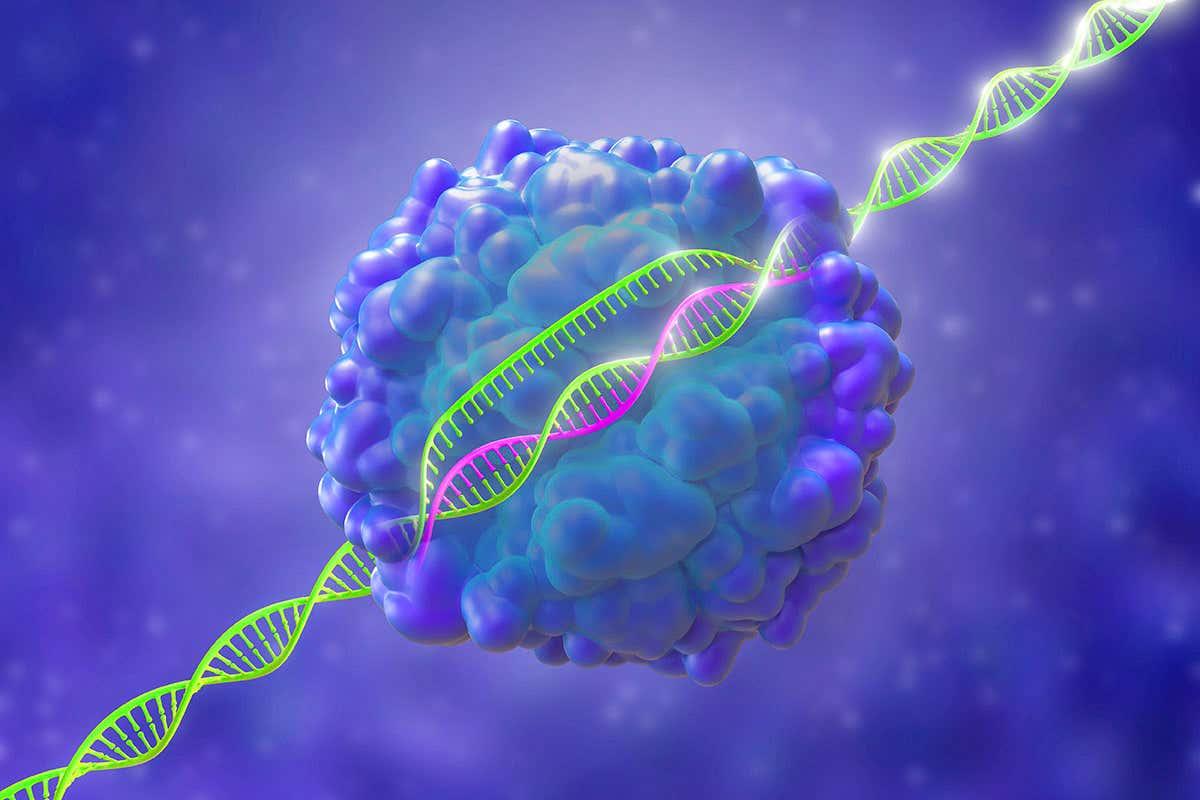 من الممكن أن تكون تقنية كريسبر آمنةً لعلاج السرطان - كيف يمكن تقنية كريسبر CRISPR للتعديل الجيني لتعديل الحمض النووي للخلايا المناعية