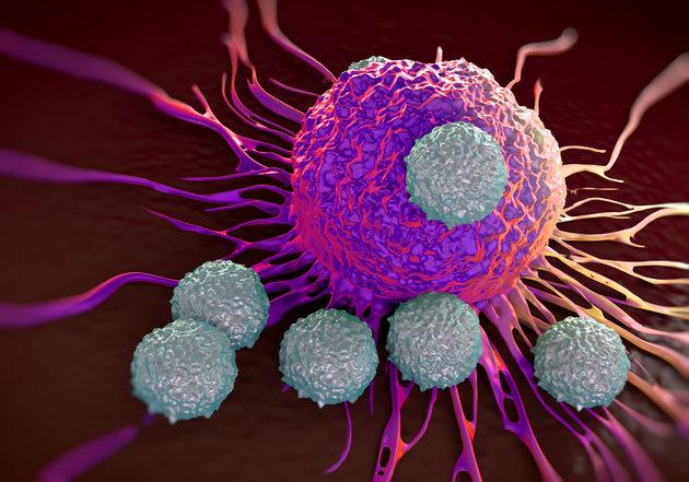 الصيام يقضي على الخلايا السرطانية في حالة الابيضاض اللمفاوي الحاد !