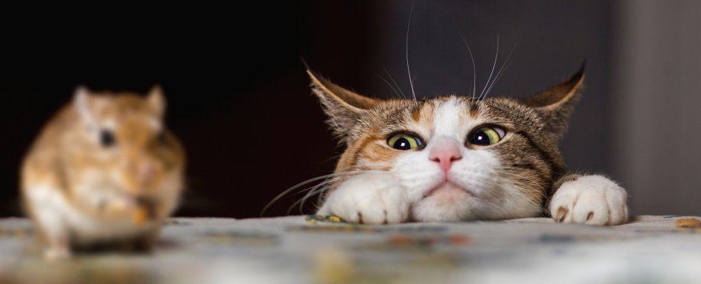هناك مشكلةٌ في سيطرة بعض القطط على الفئران