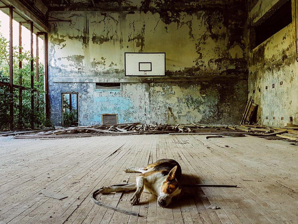 كارثة تشيرنوبل النووية كارثة المفاعل النووي تشيرنوبل أسوأ الكوارث النووية التي شهدها العالم التسرب الإشعاعي سرطان الغدة الدرقية أوروبا الشرقية