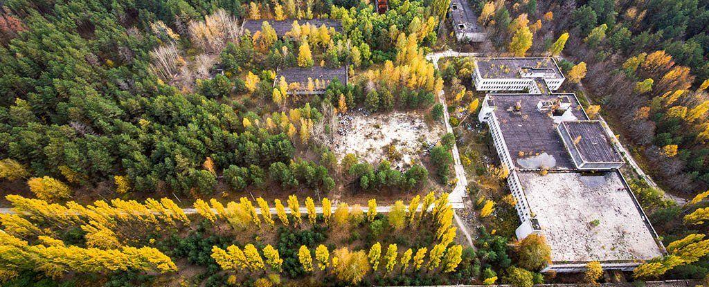 كيف ازدهرت الحياة بعد 32 عامًا في منطقة تشيرنوبل المُشعة؟