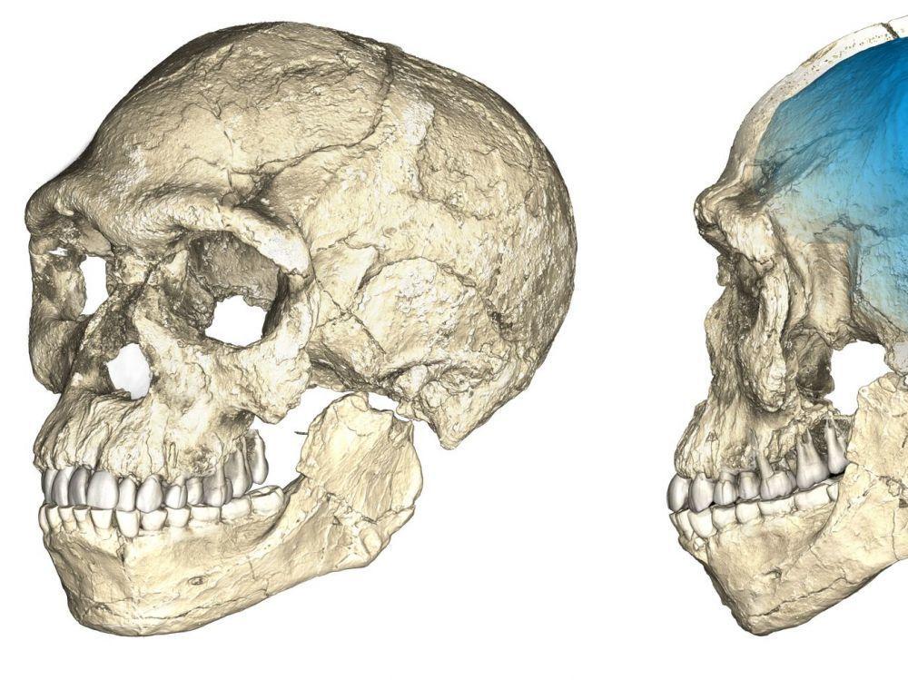 التاريخ البشري أقدم مما كنا نعتقد: العثور على أقدم أحفورة بشرية خارج أفريقيا