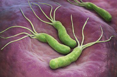 ما هي بكتيريا الهليكوباكتر البوابية عوارض الإصابة بالعدوى البكتيرية قرحة هضمية بطانة المعدة البكتيريا لتي تصيب المعدة العدوى