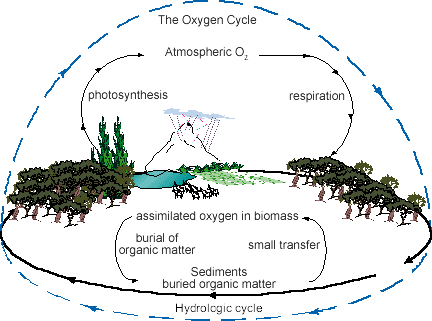 The oxygen cycle in nature Earth The Earth's atmosphere The biosphere The outer Earth's crust The gases in the air The oxygen in the atmosphere