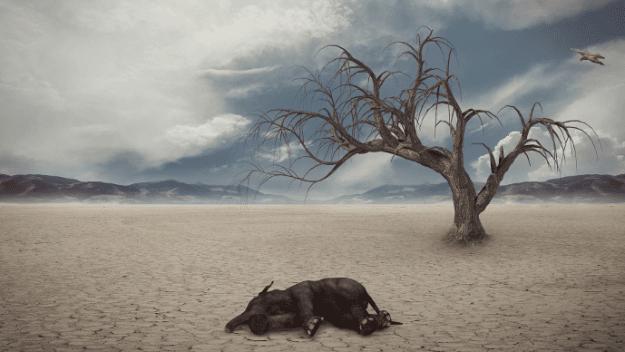 ما هي أسباب الانقراض ؟