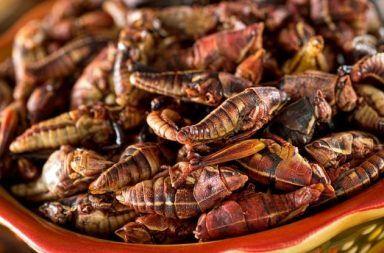 دراسة: تناول الصراصير مفيد وهذا هو السبب Delicious-crickets_1024_1024-384x253