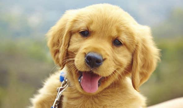 هل تعلم أن الكلاب تستطيع فهم ما تقوله أنت؟