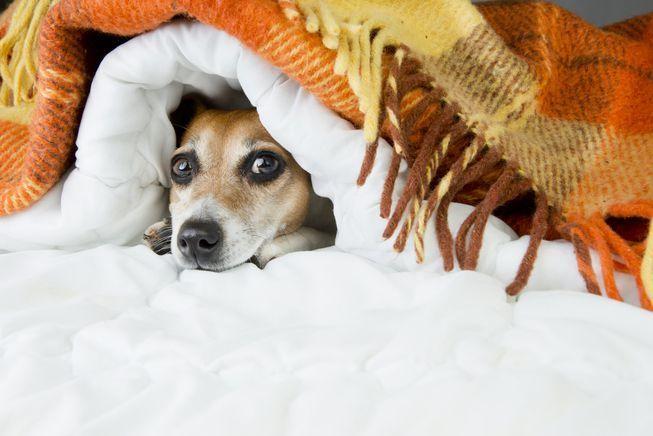 كيف تحافظ على هدوء الحيوانات الأليفة أثناء الألعاب النارية أو الرعد ؟