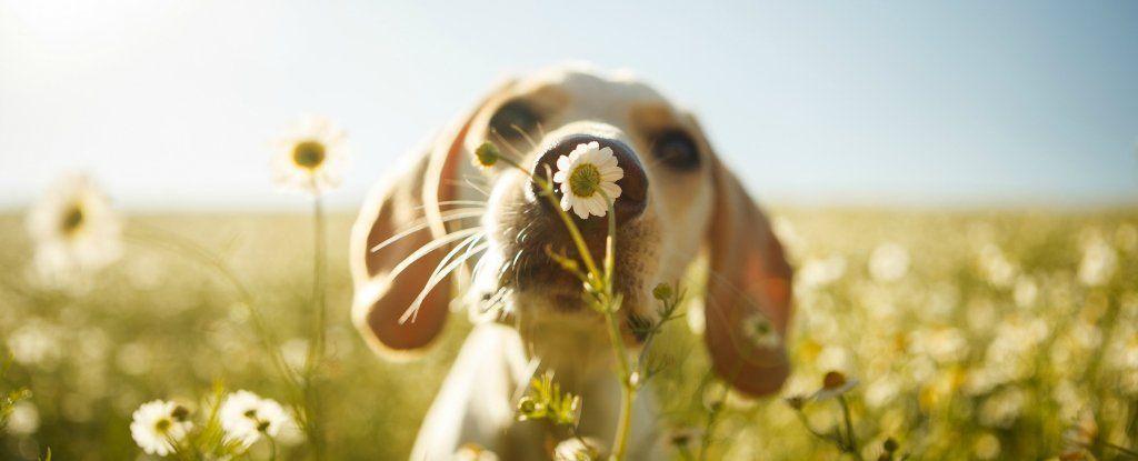هل لدى الكلاب مشاعر؟