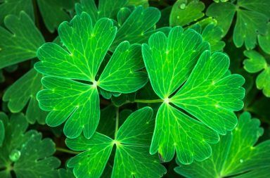 أين توجد البلاستيدات الخضراء كيف تقوم البلاستيدات بانتاج الطاقة في النبات كيف تحصل النباتات على الطاقة عملية التركيب الضوئي الخلية النباتية