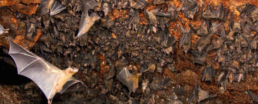 علماء يترجمون نداءات الخفافيش و هي اكثر تعقيدا مما كنا نتوقع !