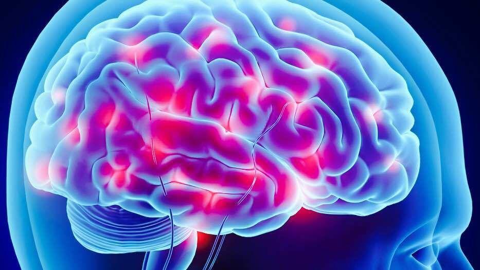 كيف نشعر بالشبع وكيف يؤثر ما نأكله على نظام الأفيونات الغذائية بالدماغ