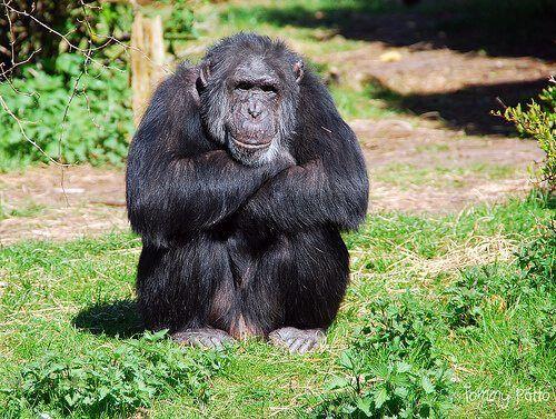 علم سلوك الحيوان الإيثولوجيا بيولوجيا التطور الانتقاء الطبيعي السلوكيات الحيوانية الحيوانات علم النفس التطوري الاستثمار الأبوي