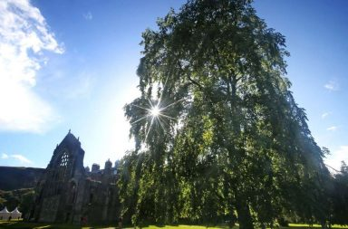 File photo dated 03/10/16 of one of two 100ft tall Wentworth elms which have been discovered within the grounds of the Palace of Holyroodhouse, the Queen's official residence in Scotland.