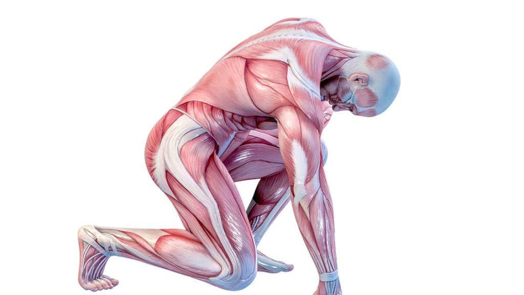 ذاكرة العضلات!?