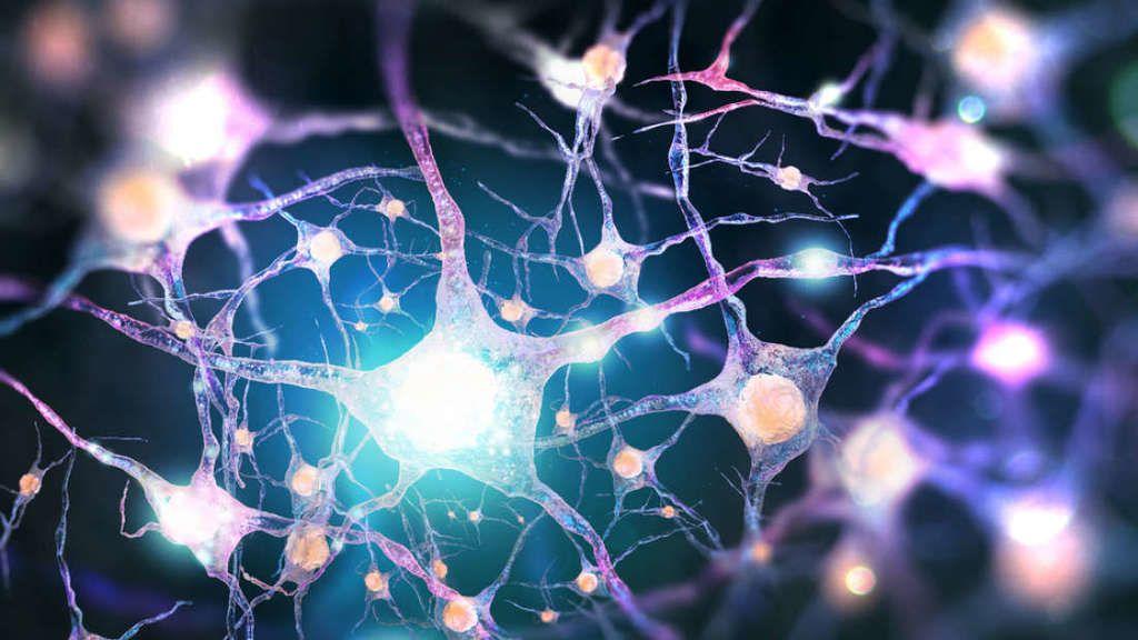 ما الذي يميز الذكاء البشري؟