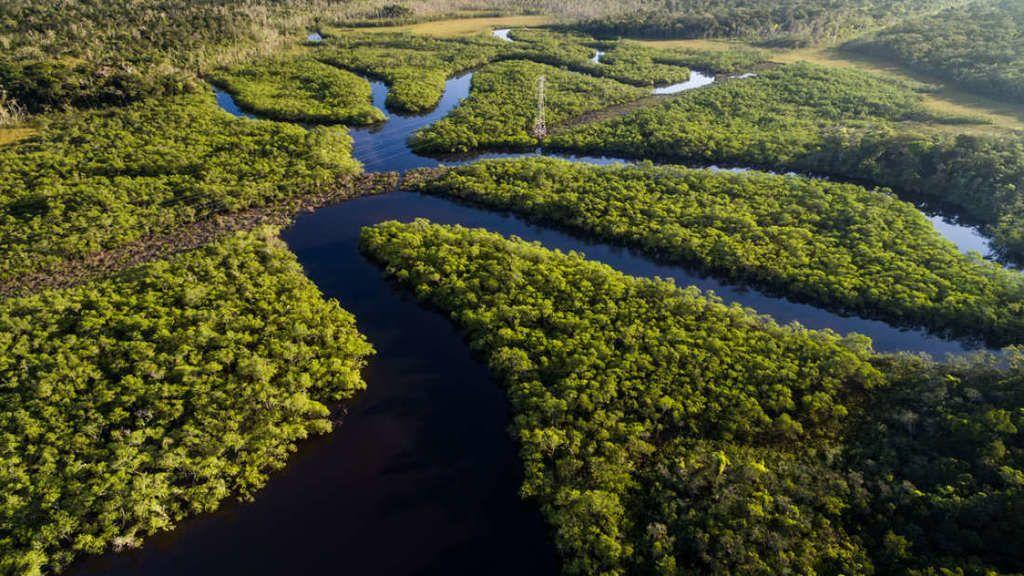 ما هي قرارات الرئيس البرازيلي الجديد بخصوصِ غابات الأمازون؟