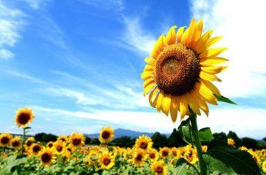 النباتات البذرية التكاثر عند النباتات البذرية كاسيات البذور عاريات البذور التكاثر الجنسي عن النباتات الققاح حبات الطلع التلقيح عند النبات