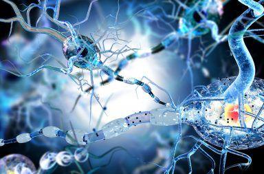 اكتشف العلماء سببًا جديدًا وراء شيخوخة الخلايا خطوة جديدة للبشرية نحو علاج الشيخوخة كيف سيتمكن العلماء من وقف التقدم بالعمر
