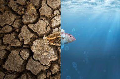 هل تظن أن التغير المناخي ليس أمرًا عاجلًا؟ انظر لما أحدثه بسواحل أستراليا آثار التغير المناخي في العالم اليوم نتائج الاحتباس الحراري على البيئات البحرية