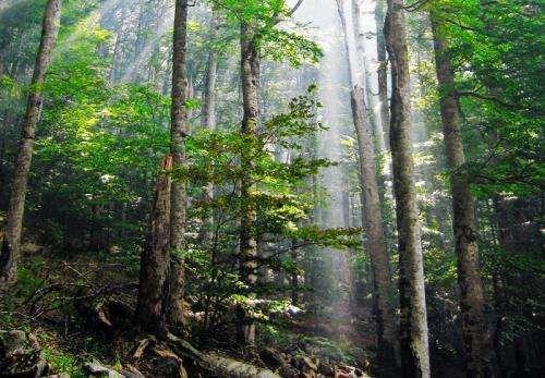 ما هو مصدر هذا التنوع الكبير في الغابات على الارض ؟