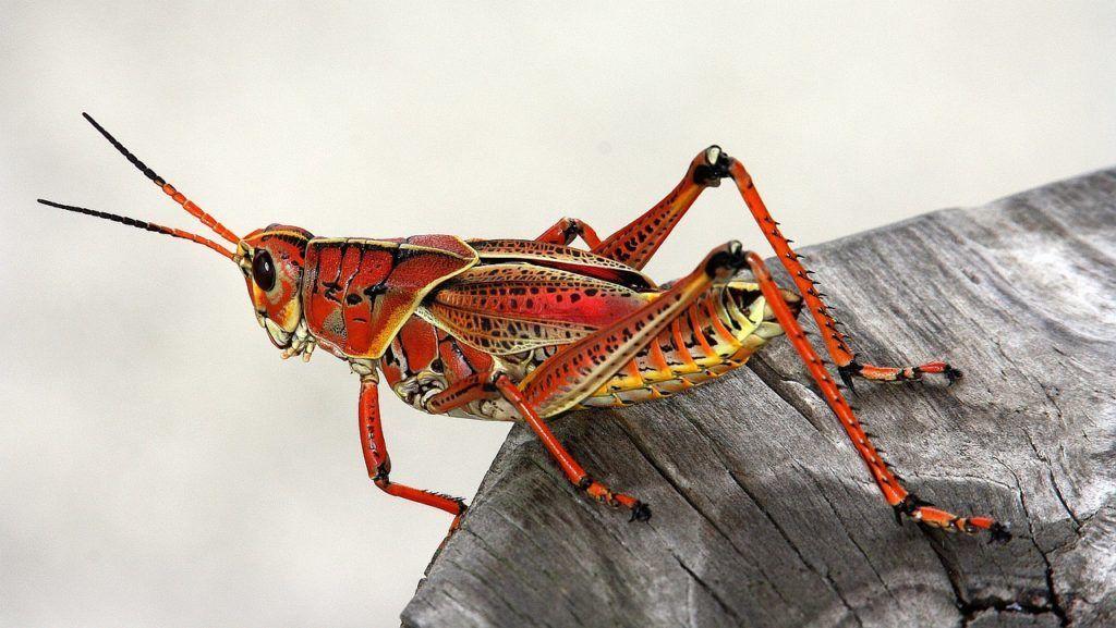 البنتاغون يرغب بصنع جيش من الحشرات الناشرة للفيروسات والعلماء قلقون جدًا