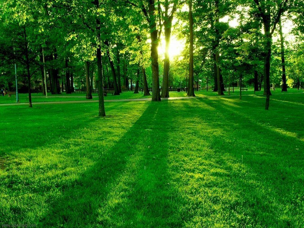 ما الذي تفعله المساحات الخضراء بنا ، و كيف تؤثر على مزاجنا ؟