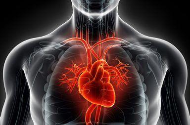 قصور القلب: الاسباب والأعراض والتشخيص والعلاج عدم قدرة القلب على ضخ الدم إلى جميع أنحاء الجسم بشكل صحيح التدخين التقدم بالعمر