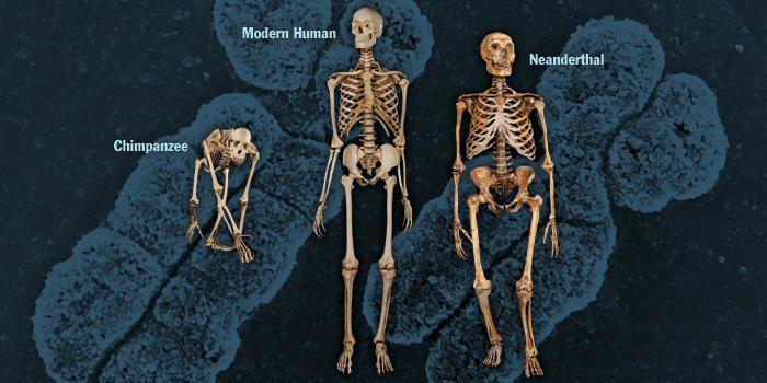 هذا كل ما يعرفه العلم حتى الان عن أصل البشر